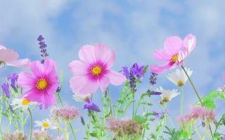 Как распознать у ребенка аллергический кашель